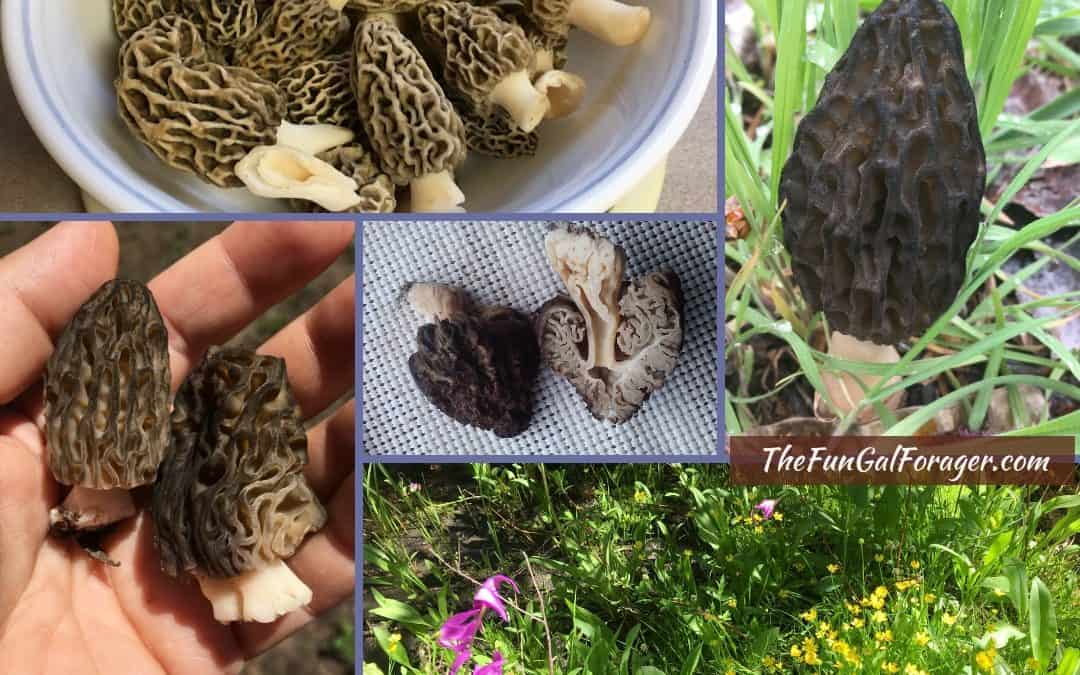 How to Find Morel Mushrooms in Idaho and Beyond: A Comprehensive Beginner's Guide